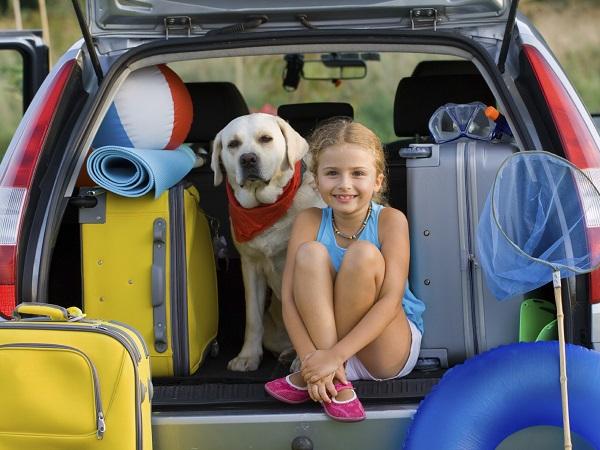 Sabes que si tu mascota viaja en coche dentro del - Maniqui de perro ...